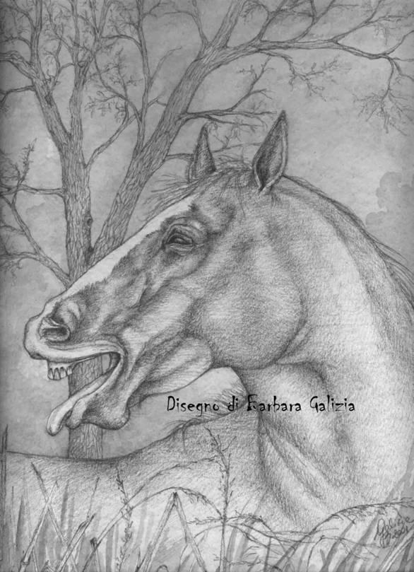 Barbara galizia disegni matita acquerello acquerelli for Disegni di cavalli a matita