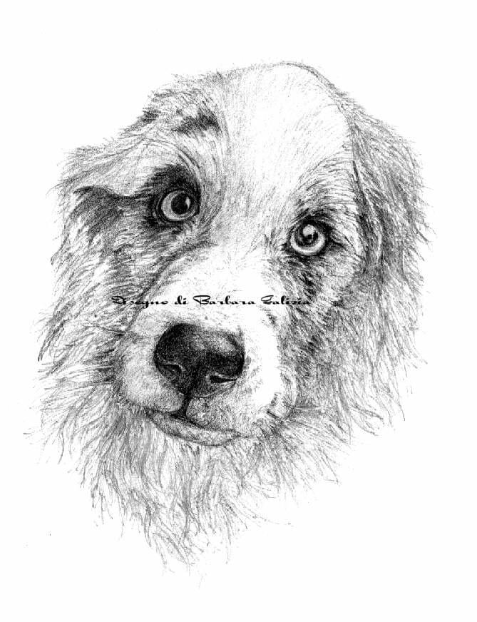 Disegni bianco e nero su internet for Disegni a matita di cani